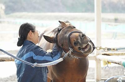 馬とハッピーコミュニケーションしましょう!