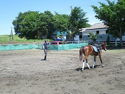 新馬調教 馬と親和を図る