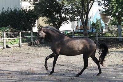 とても楽しそうな馬の表情