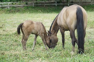 子馬を育てるにはものすごい手間がかかります