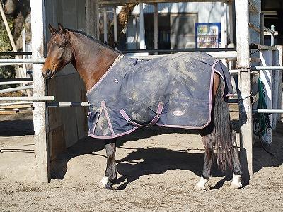 ハッとするような素晴らしい馬に育てています