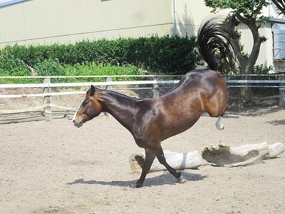 馬を健康にするには半年や一年はかかります