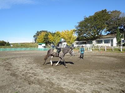 馬と一緒に楽しく