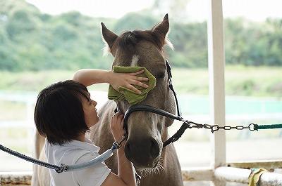馬に好かれるリーダーになることが重要だ
