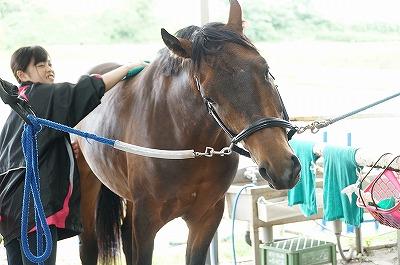 馬のせいということはない。すべては人間の影響。