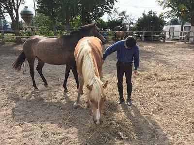 馬と思い思いの時間
