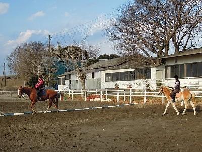 馬と楽しいコミュニケーションを!