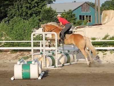乗用馬販売 販売中の馬