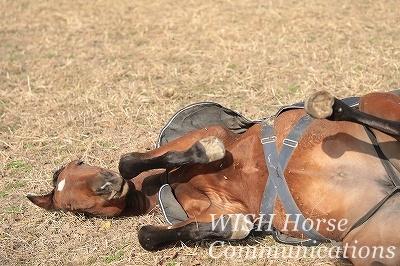 寝転ぶ子馬