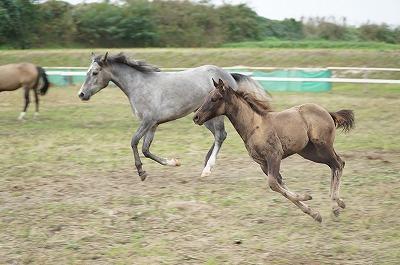 馬を健康に管理するために