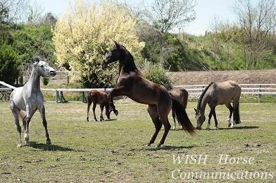馬がお相撲を取る