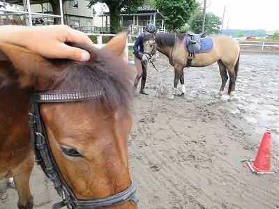 新馬調教 いい子いい子してあげる