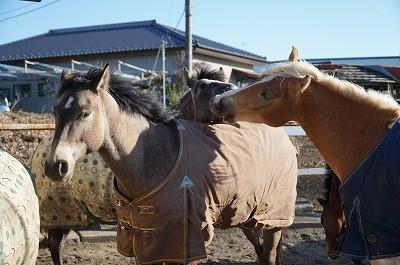 みんなで遊ぶ馬たち