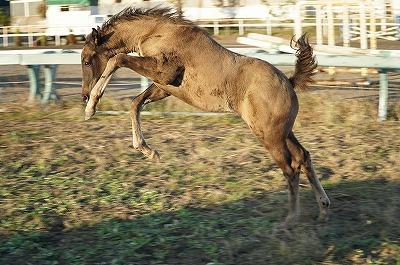 馬がどんなことで喜ぶのか知ろう