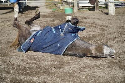 馬が気持ち良さそうに寝転ぶ姿