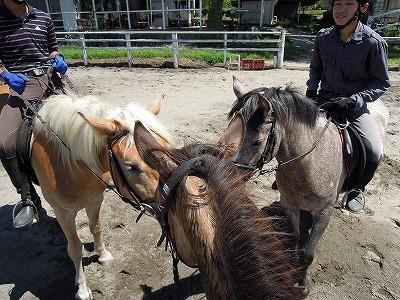 仲が良い馬たち、ナイショ話かな?