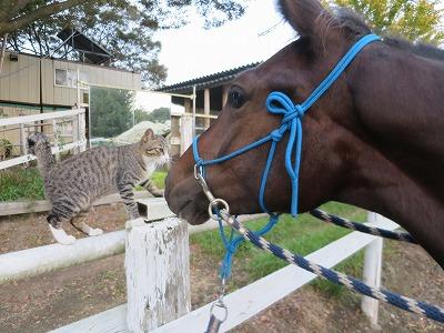 仲良しの馬と猫