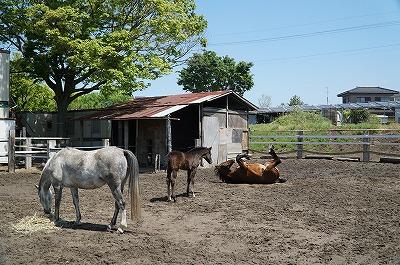 乗馬は環境が大切