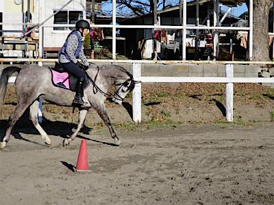 馬に喜びを表現