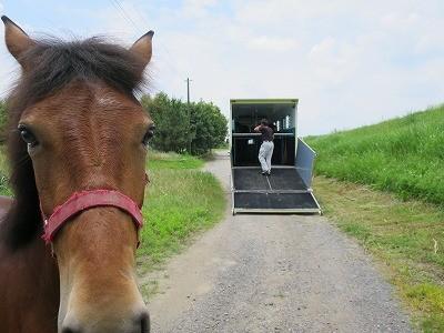 新馬調教 馬と結びつけますように