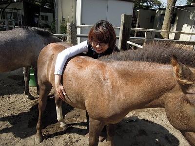 健康な馬の背中