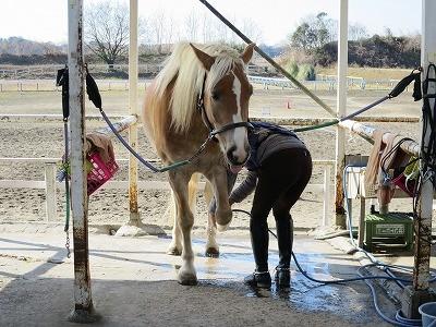 気持ちいい馬の表情