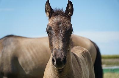 それぞれの馬の精神性を見てほしい。答えは「わからないけどこっちを見てる」です
