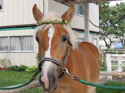 馬とクローバーの花飾り