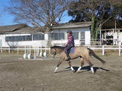 馬と気持ちが通じ合う、それがウィッシュの乗馬