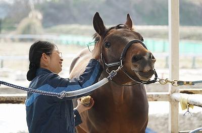 馬は人間次第で幸せになれる