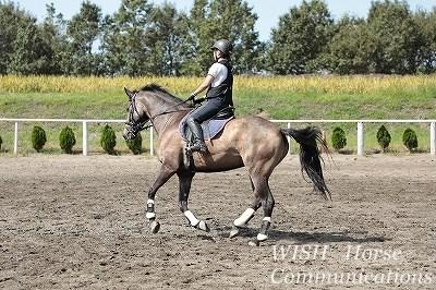 良い馬と上達できる練習を