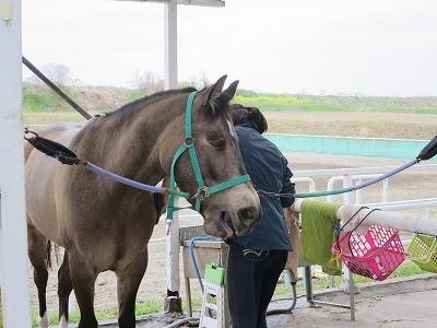 人と馬の幸せな時間