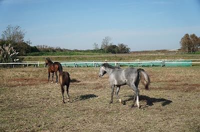 自然な馬の群れでの自然な行動