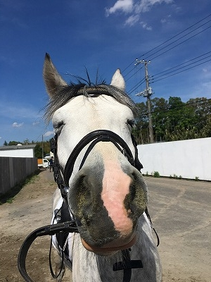 愛馬と競技会