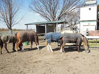 馬達の仲良し放牧♪