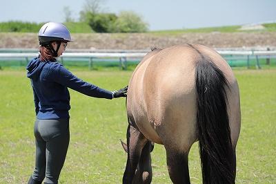 馬の真理を知りたい
