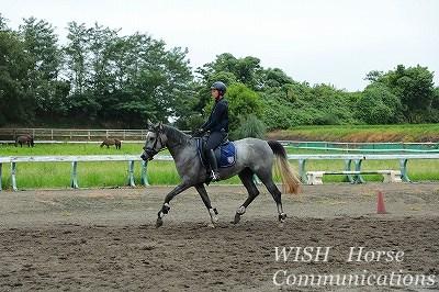 馬には馬の気持ちがある。