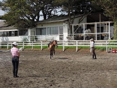 馬とのコミュニケーション風景