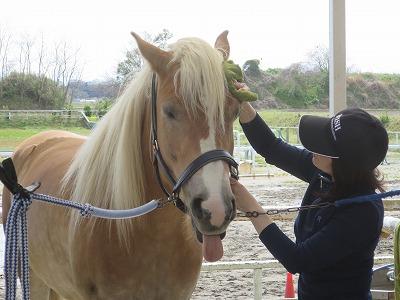 乗馬は愛だよ!