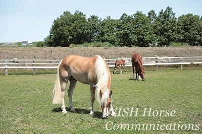 健康な馬の放牧風景