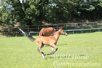 美しい馬の走る姿
