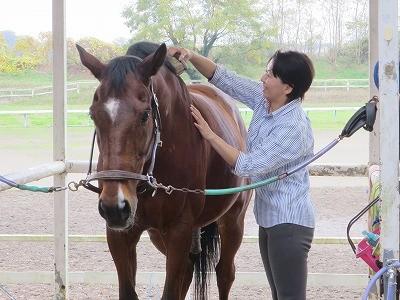 馬目線の優しい手入れ