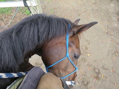 馬とお互いの信頼を基礎にした関係を築き上げること
