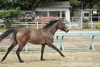 馬が楽しい乗馬