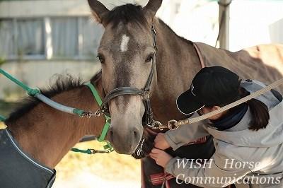 仔馬と楽しい会話