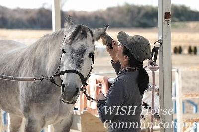 信頼と教育でおとなしい乗馬
