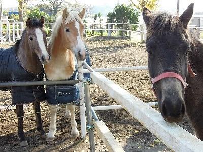 ウィッシュの馬は馬同士仲良し人と仲良し