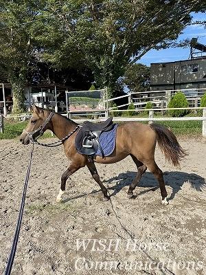 調和の乗馬
