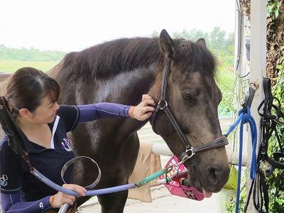 馬との優しい絆