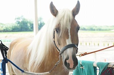 馬と目が合う瞬間は最高!